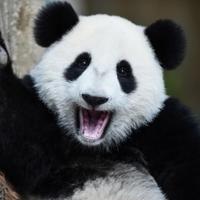 awkward_panda