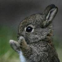 bunnykr