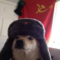 sovietdog